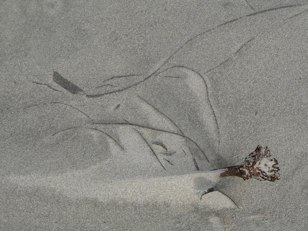 le sable de la plage des grands sables
