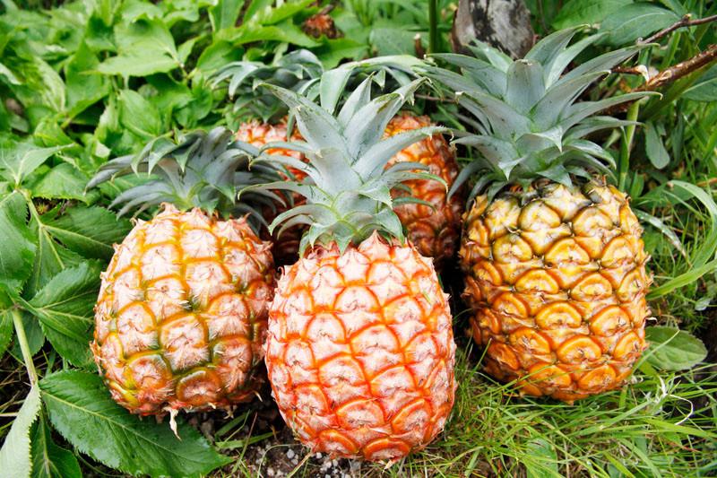 「パイナップル」の画像検索結果