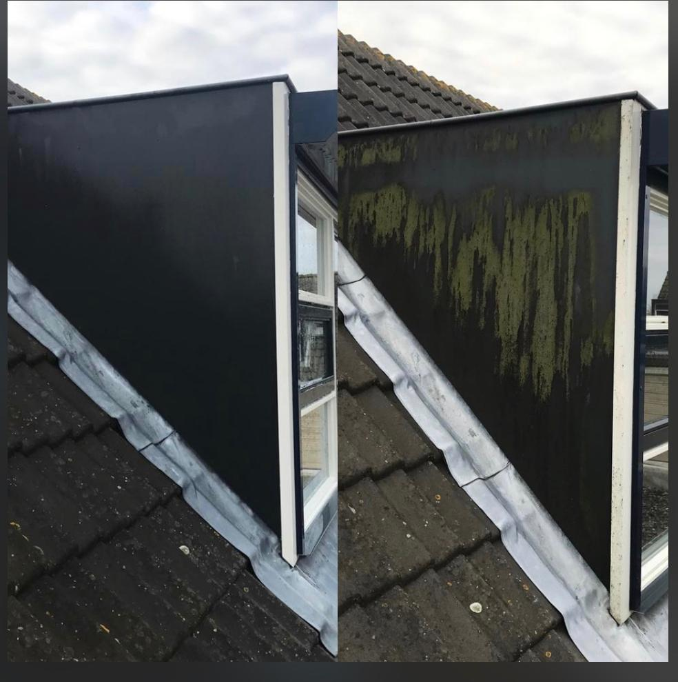 Grünbelag Entfernung Dach