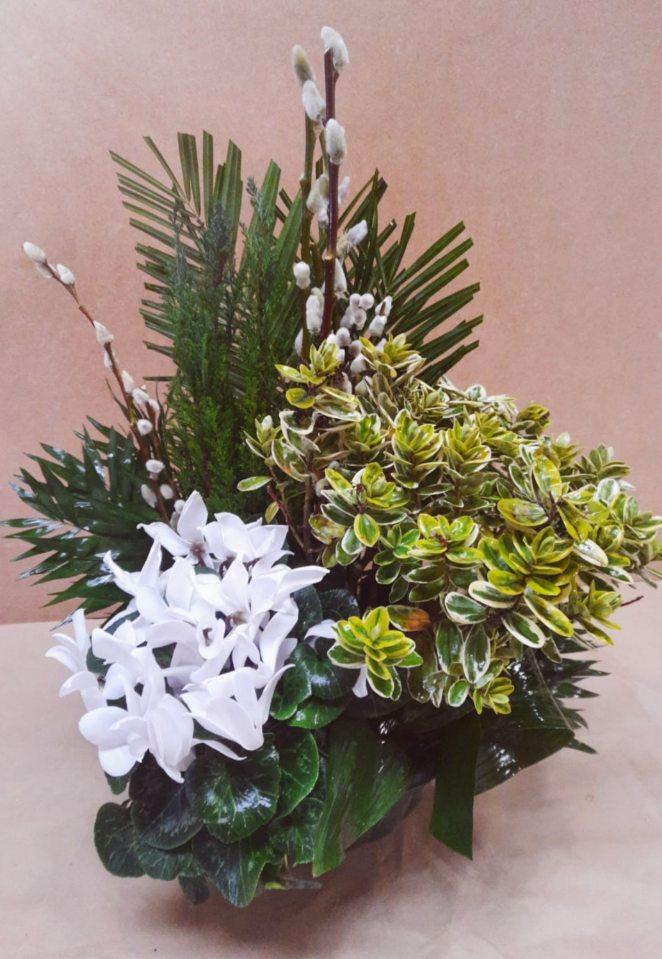 Composition de plantes fleuries tons blancs assorties de Conifère panachés