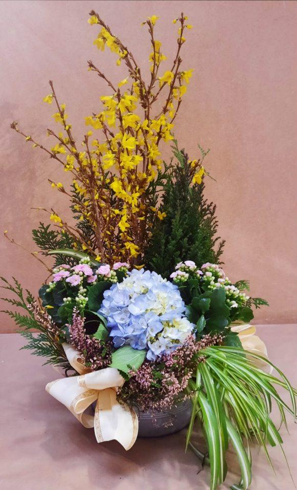 Composition de plantes fleuries tons bleus et roses assorties de Conifère panachés