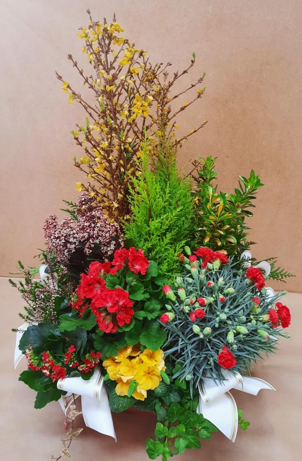 Composition de plantes fleuries tons jaunes et rouges assorties de Conifère panachés