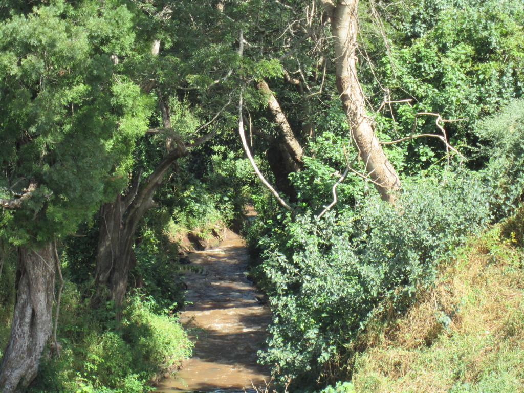 ンダラクワイキャンプの回りを散歩しました。ハーブがいっぱい咲いていました。