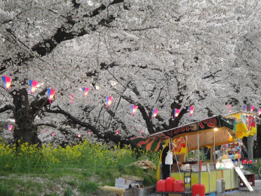 足利市千歳町の桜吹雪がすっごく良い感じ大月から歩いて来ました。
