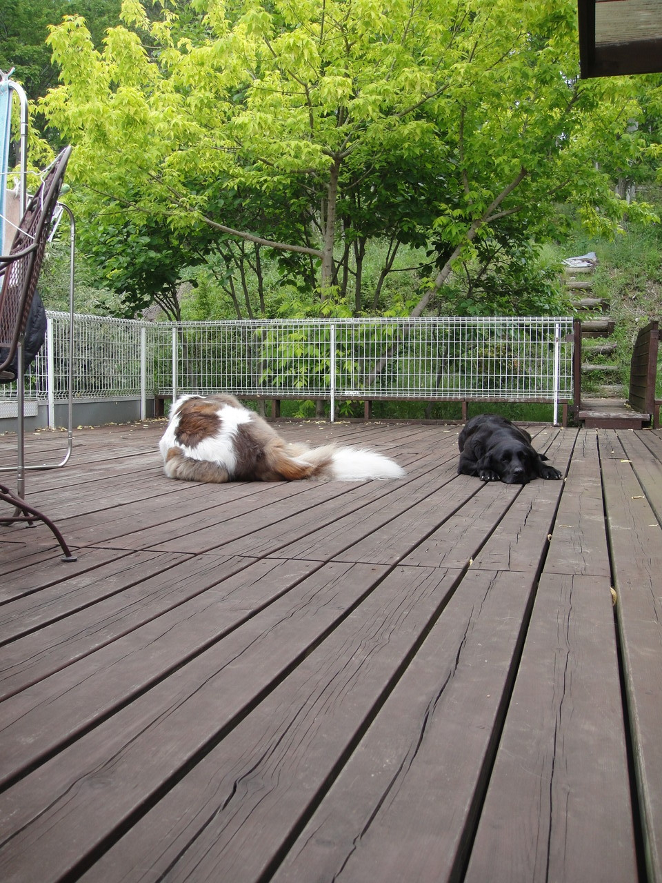 待ちくたびれて二人とも横になって。