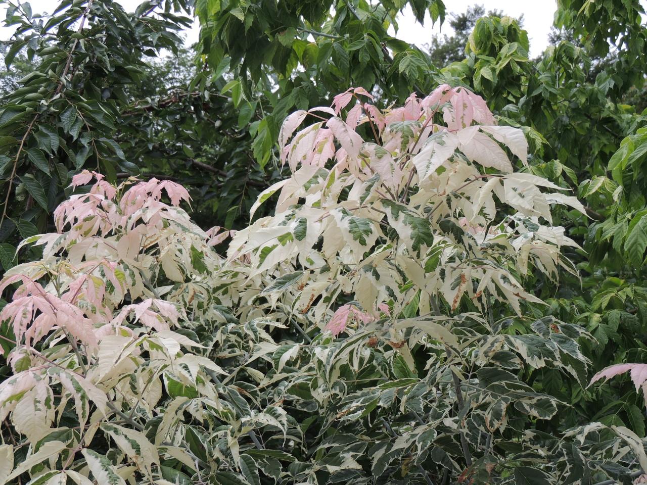 楓の新芽なんて優しい色なんでしょうね