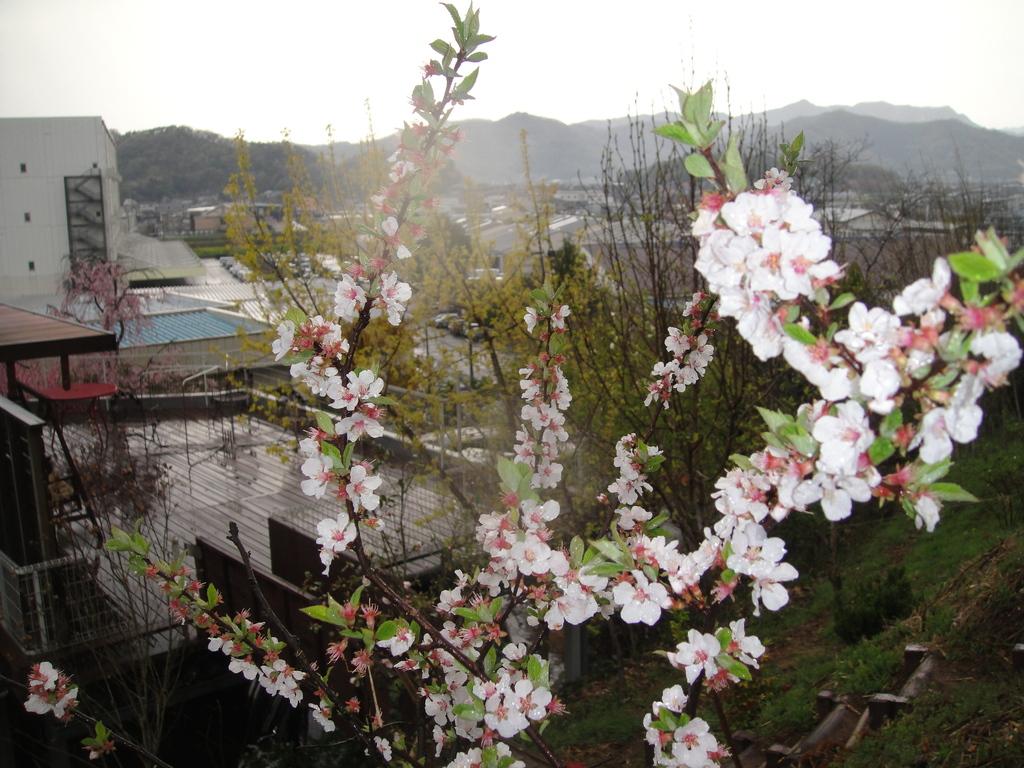 桜桃 (ゆすらうめ)毎年満開に、実も鈴なりになります。