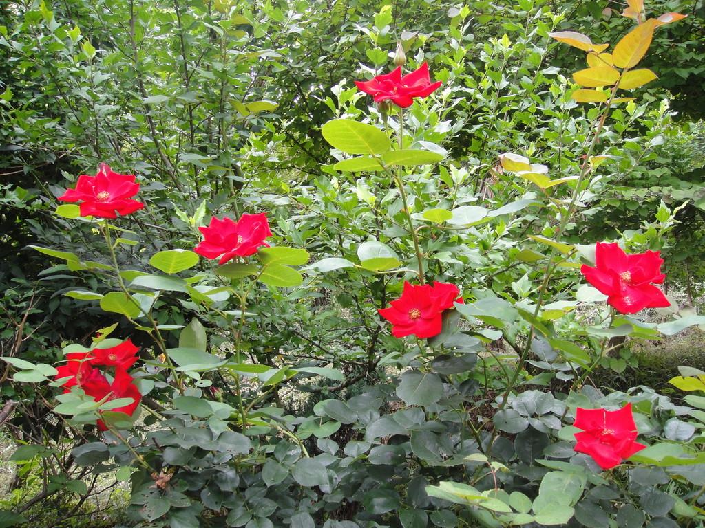最近の草花たち