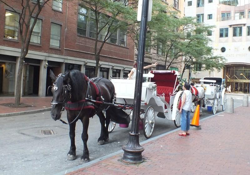 観光客向けの馬車です。疲れたので、馬車で市内観光しました。