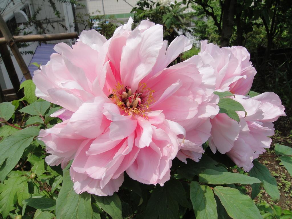 淡いピンク色が、なんとも優しさいっぱいで、いい感じです。