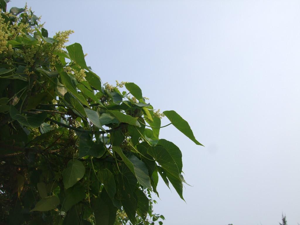 宮古島の青空