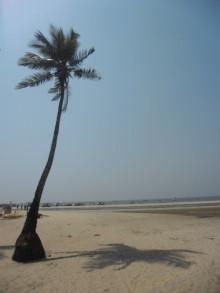 コルヴァビーチ画像検索より