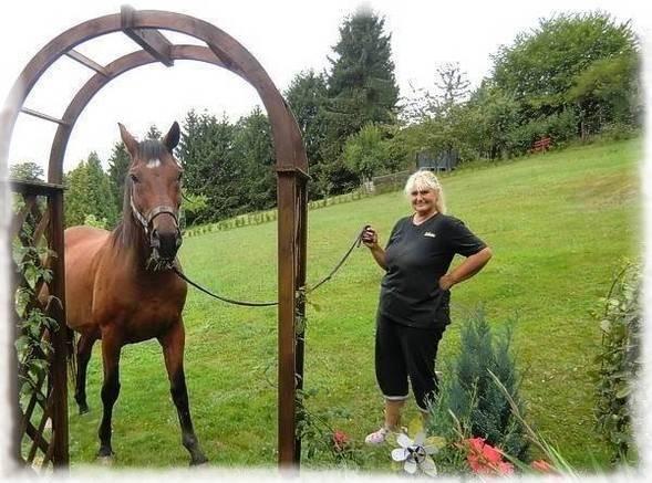 """unser Pferd """"Frapper"""" in unseren Garten"""