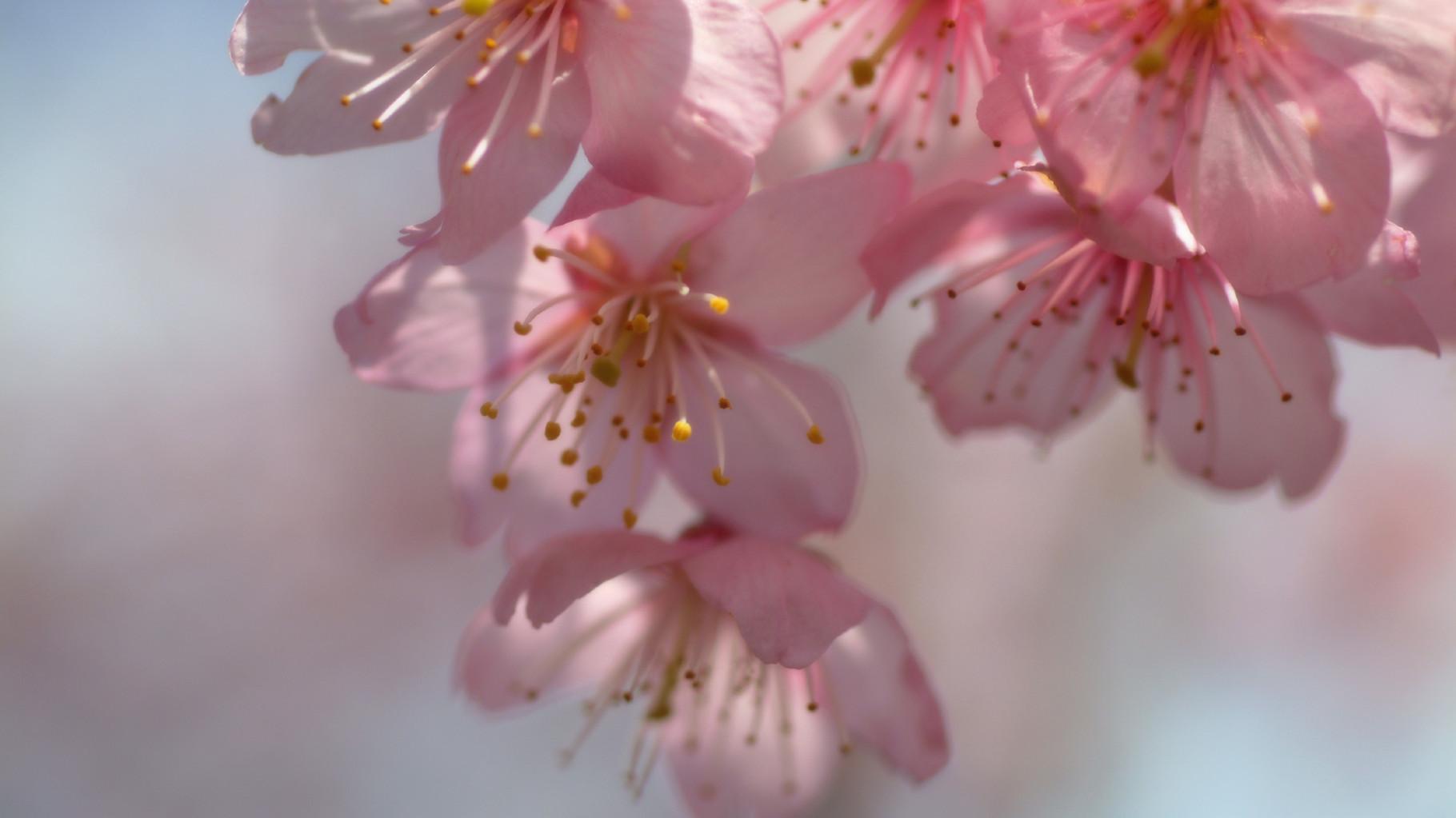 花が咲く日々を夢見て   相続 遺言 家族信託    ℡045-410-7622  司法書士高田秀子事務所