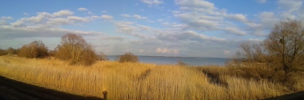 Lac du Der le 03 mars 2016