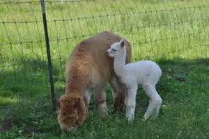 feinste Faser von Mutter und Kind