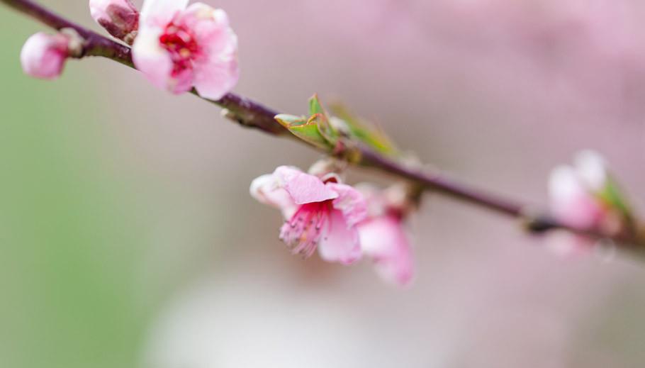 Frühling,-Baumschule-Schröder,-spring,-cherry-blossom,-peaches,-beauty,-fashion,-portraits,-Fotograf-Bremen,-Fotograf-Diepholz,-Obstbäume,-fruittrees,-sabine-Lange,-biene-photoart-1