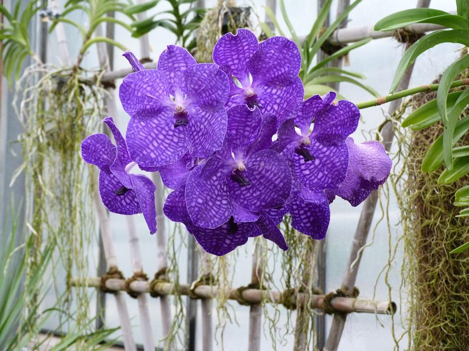 Violet und Grün - eine Kombination aus der Natur