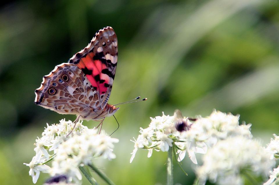 Schmetterlinge haben auch eine Glücksymbolik!