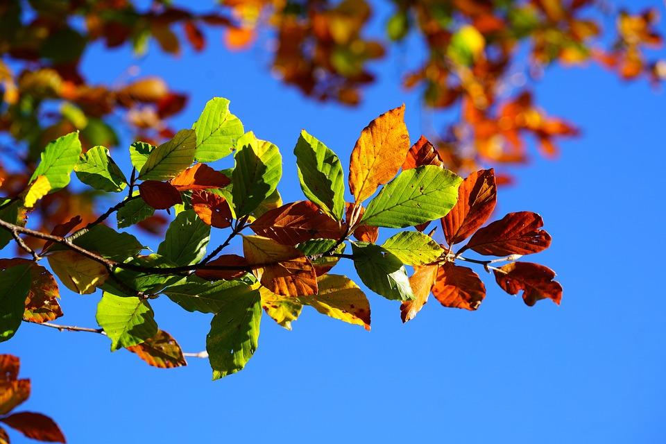 Grün-goldener Herbst