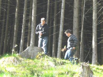 Aufforsten - Bereich Ötschen (Hainzenberg)