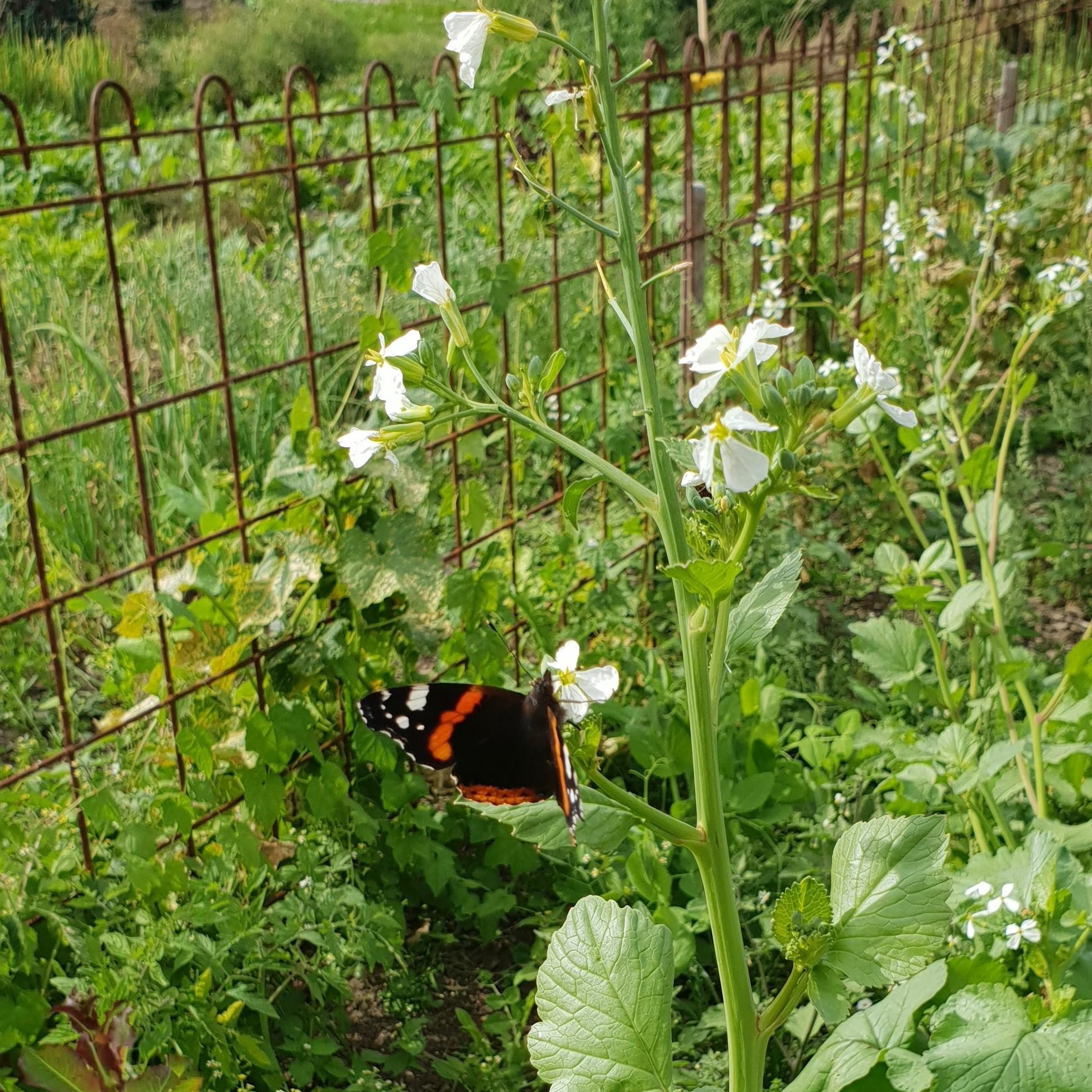 Die Vielfalt an Schmetterlinge ist auch auffällig gestiegen.