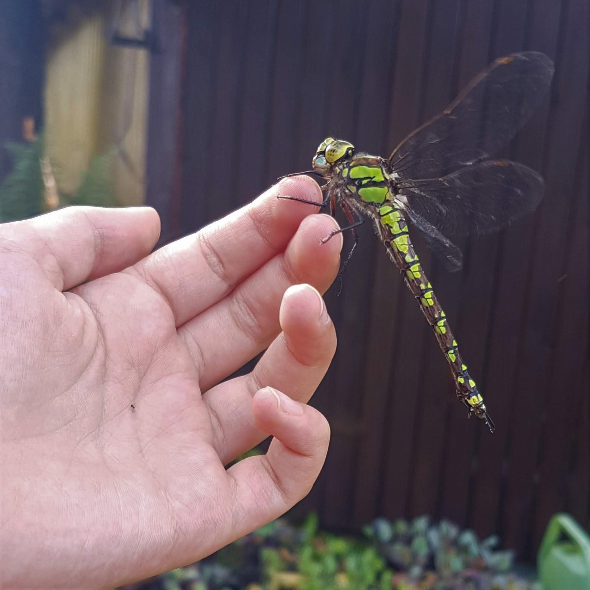 Dank dem Bioteich im Privatgarten gibt es eine Fülle an Libellen, Frösche, Kröte und gefährdete Schneckenarten.