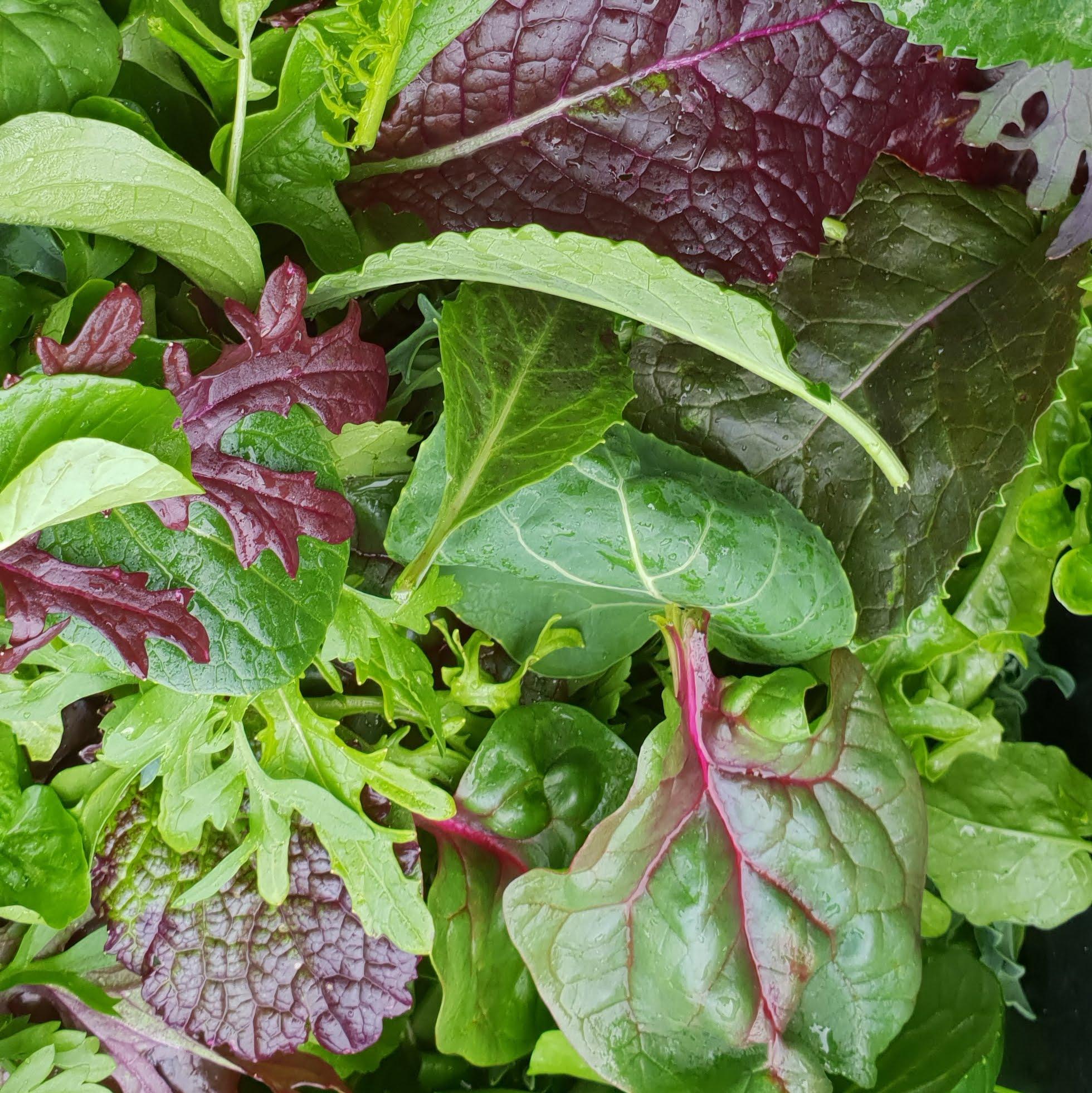 Salatmischungen im Herbst sind gesund, voller Geschmack und farbenfroh