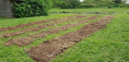 Und auch ein Bereich hinter dem Gartenschuppen. Hier gibt es 80cm breite Beete und engere Wege, langfristig für mehrjährige Kräuter geplant.