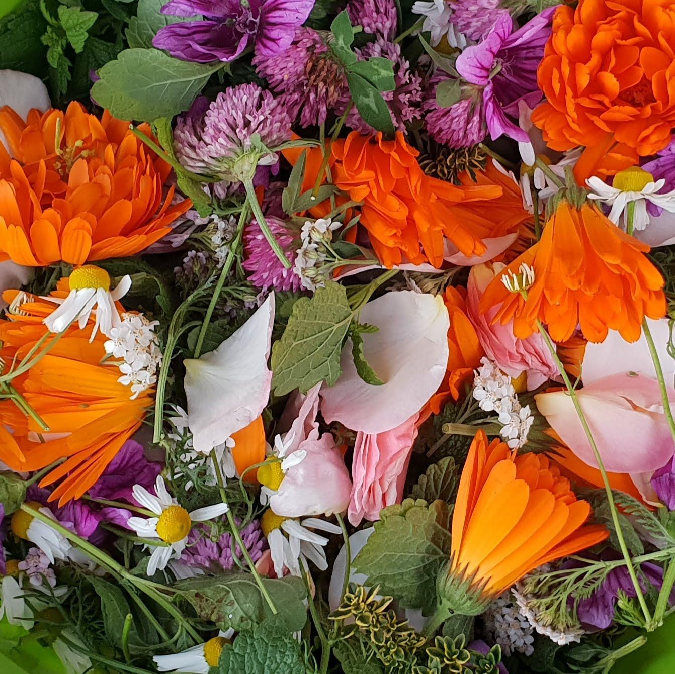Auch essbare Blüten sind Geschenke der Natur im Herbst.