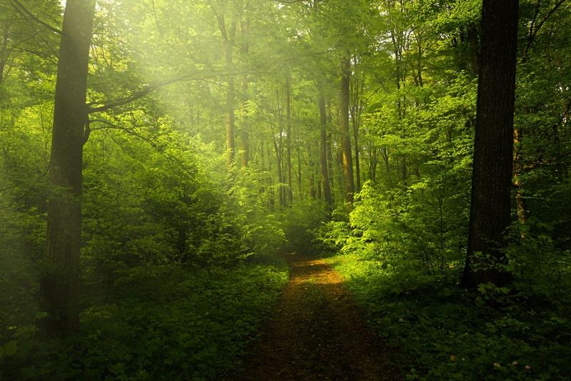 木々が茂る森の風景