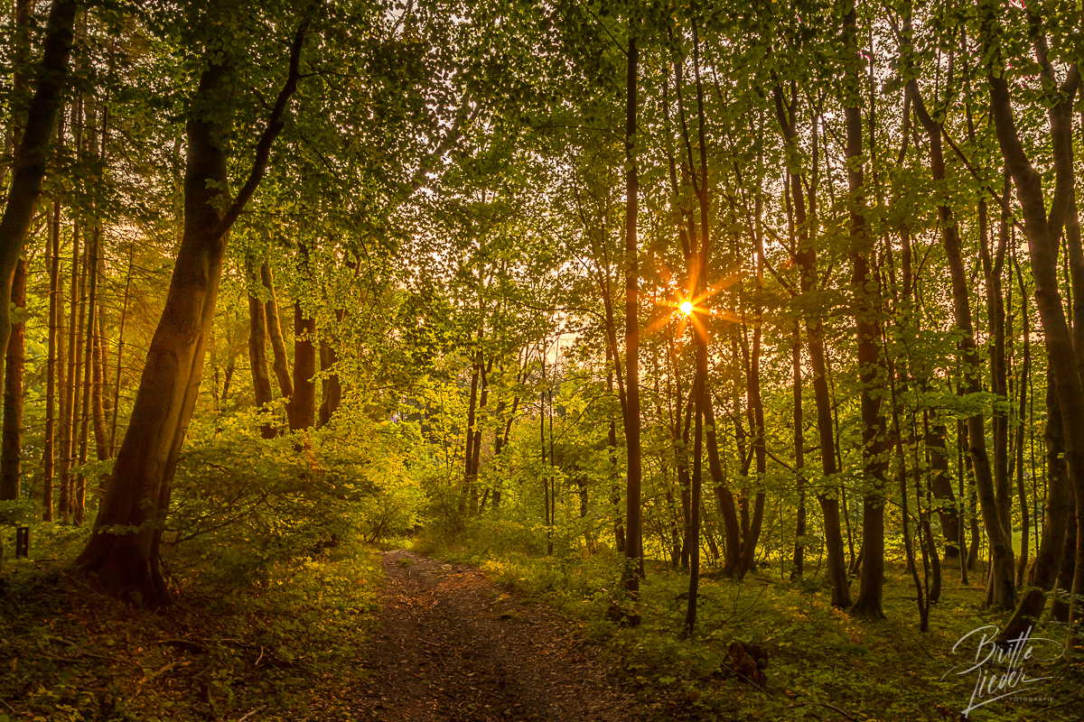 sauerland, eisborn, wald, sonnenstern, wandern, wanderung, hiking, wanderroute, karte, tipps, infos, aussicht