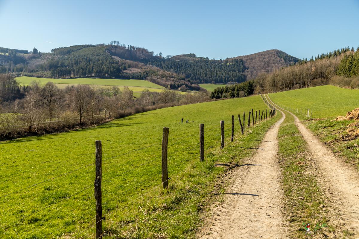 wenholthausen, golddorf, route, rundwanderung, wandern, sauerland, wanderung, infos, tipps, karte