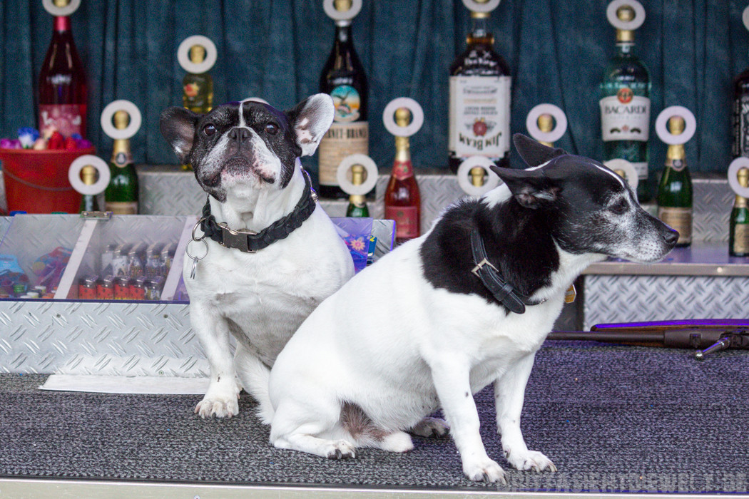 Französische Bulldogge und Mischling an der Schießbude