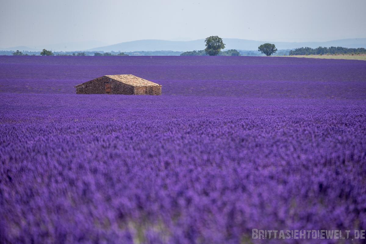 provence, lavendelblüte, lavendel, valensole, reisetipps, infos, wanderungen, roadtrip