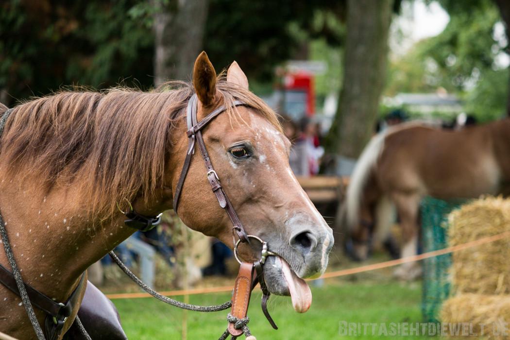 Pferd streckt seine Zunge raus.