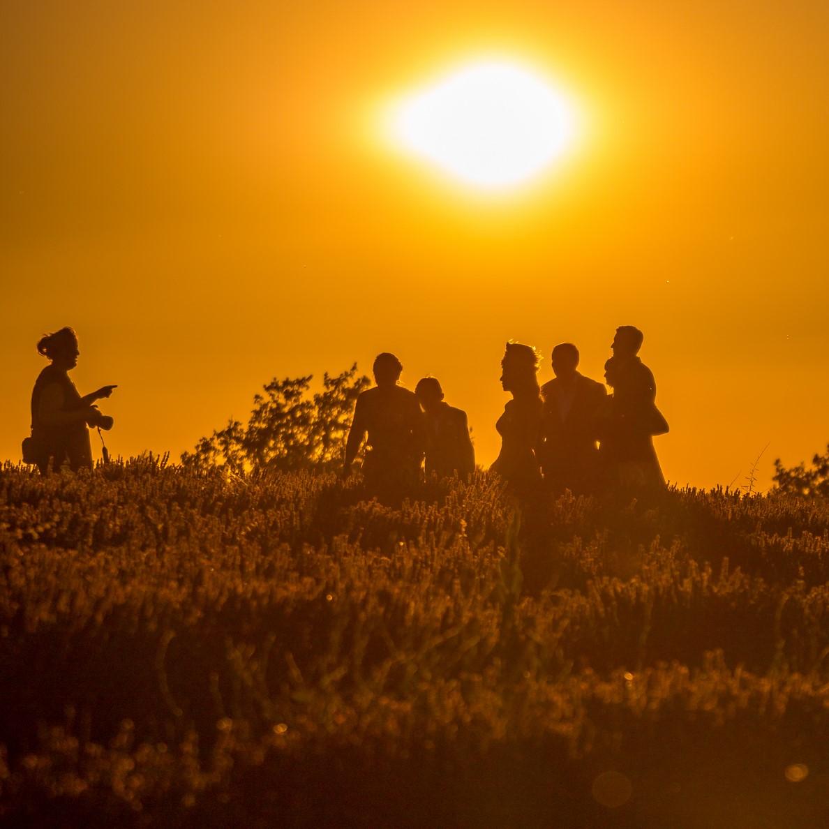 hochzeit, lavendelfelder, lavendel, lavendelblüte, sommer, luberon, reisetipps, infos, selbstgeplant, frankreich, provence