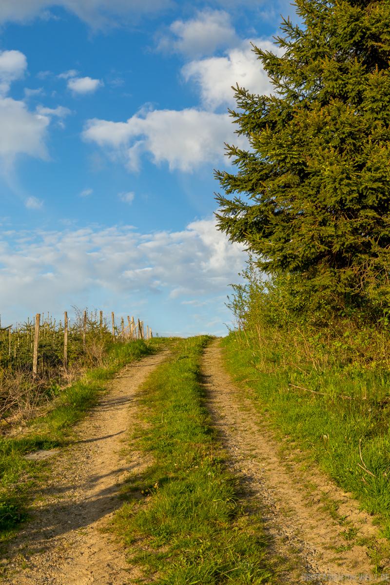 sauerland, naturpark, homert, Markshöhe, oesterberge, hiking, wanderung, aussicht