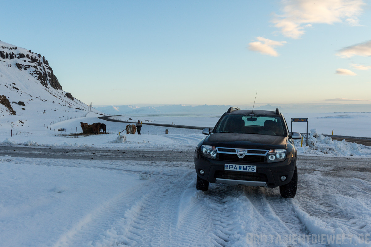 Ein Halt bei den Islandpferden