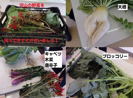 当日採れたいろいろな種類の野菜を持ってきてくれました!