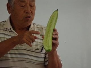 昔は全部食べずに,来年の種のため育てていたそうです!(^^)!
