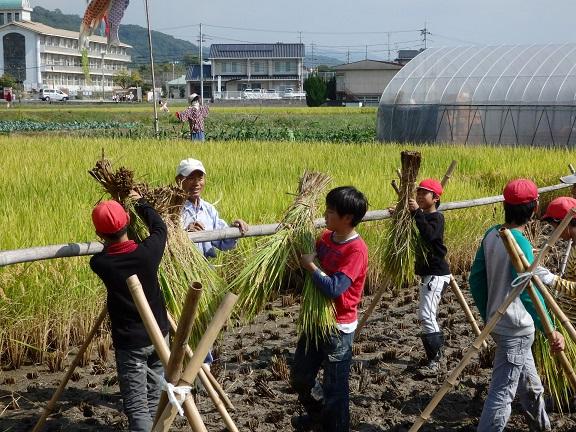 はぜ掛けは一苦労(汗)束ねた稲は意外と重量があります。