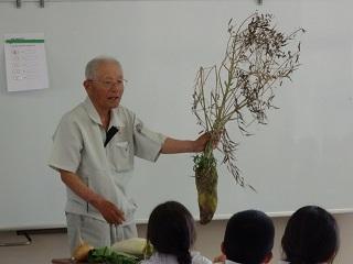 大根は地上部に花が咲いて種がつきます