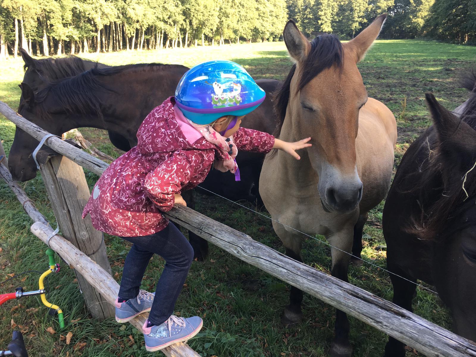 Spaziergang zu den Pferden/Kukuk