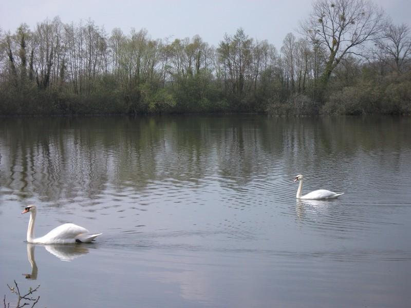 Location de vacance près des marais