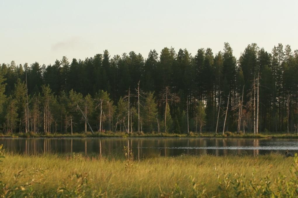 Lac tourbeux