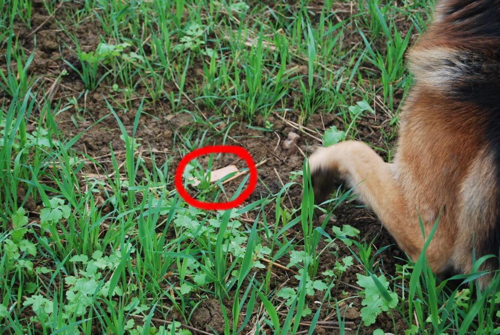Verweissen eines gefundenen Gegenstandes (roter Kreis)