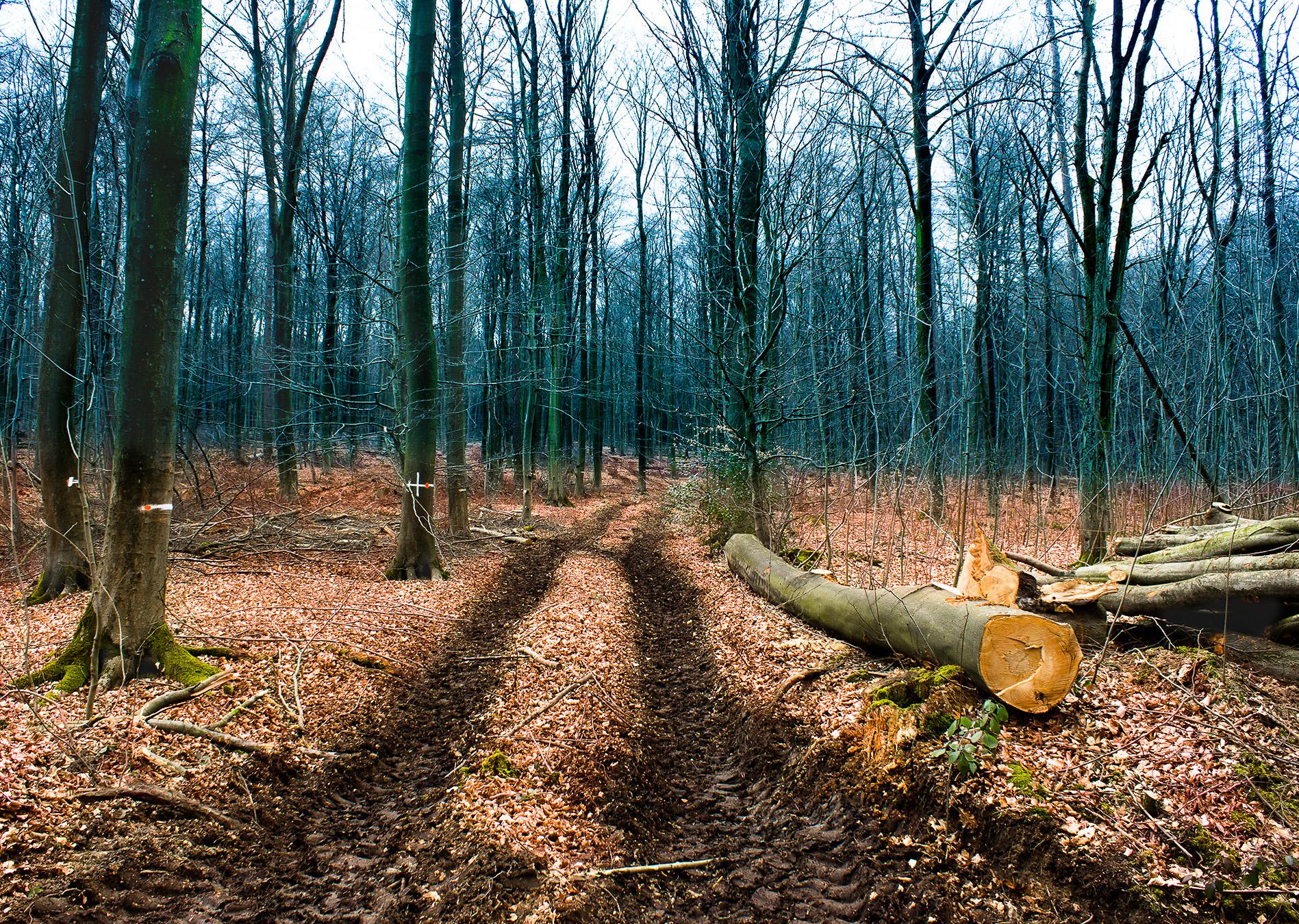 Waldspaziergang im Deister