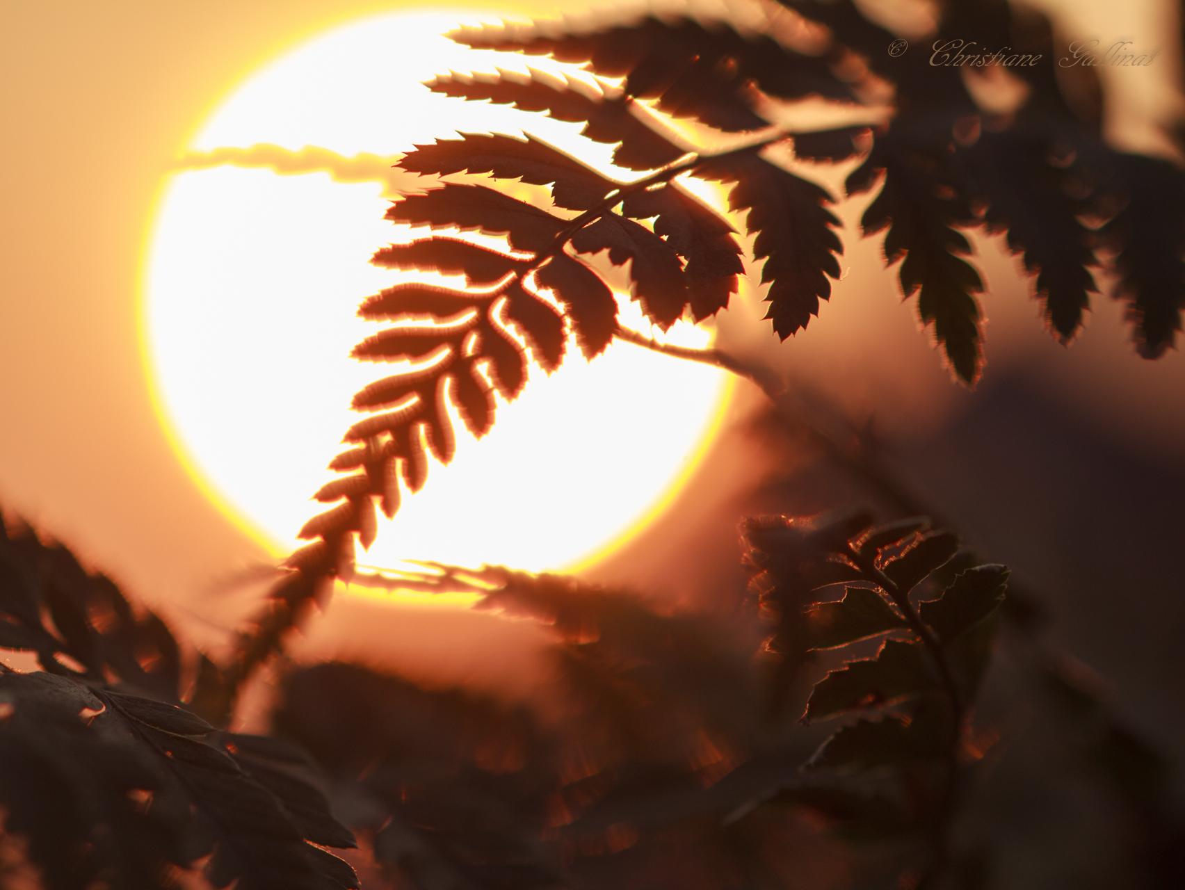 Inspiration Farn in der Sonne