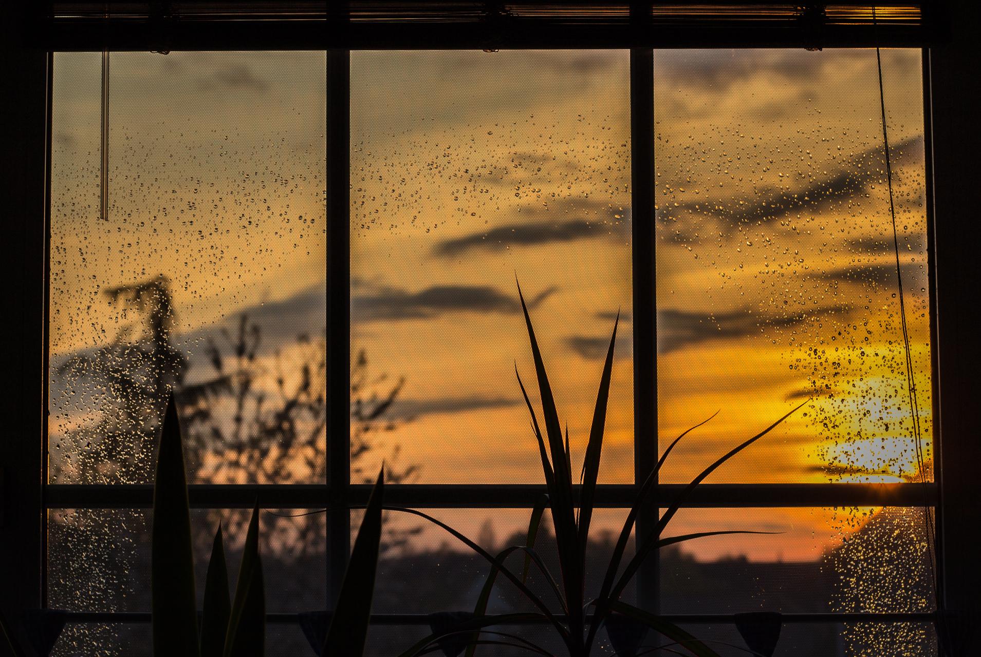 aus dem Küchenfenster